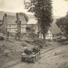 backhauswegbea2